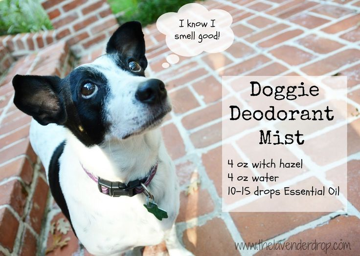 No more STINKY DOG: Stinky dog spray using essential oils; Doggie Deodorant Mist