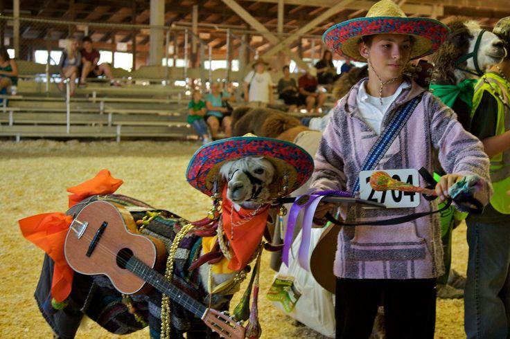 Minnesota State Fair ~~ Llama with a serape and guitar