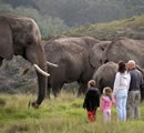 Family activites in Knysna such as visiting the #Elephant sanctuary