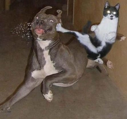 e34d9fcf826da9750accbac222c0ef5b--kungfu-ninja-cats.jpg