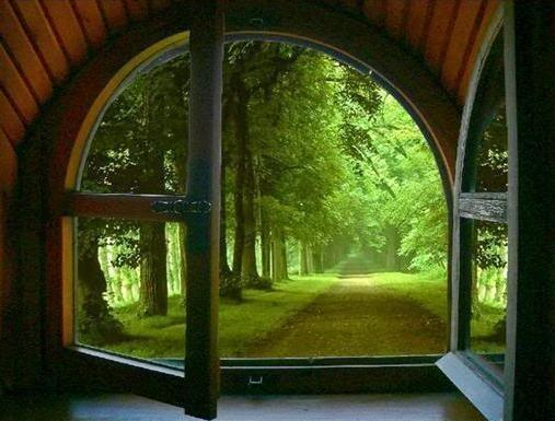- love the shape of the window- WINDOW VIEW