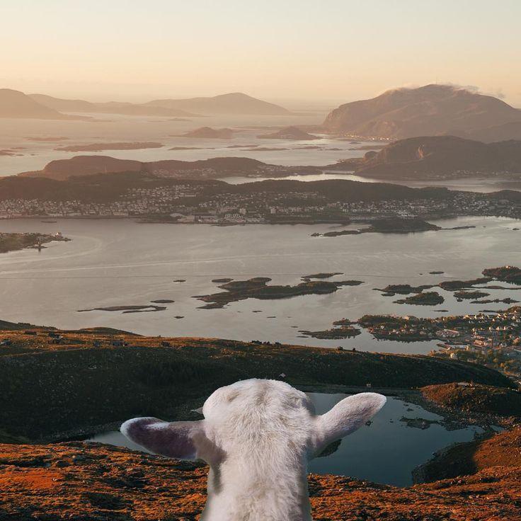 This is why Norway is the world's most baaaa-utiful country ❤️  -Frida, #SheepWithAView Frida|Erik|Kari|Lars (@sheepwithaview) • Instagram-bilder og -videoer