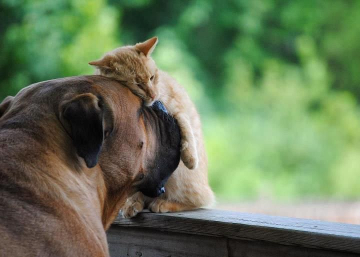 friendsUnconditional Love, Best Friends, Dogs And Puppies, Dogs House, Dogs Cat, Sweets Dreams, Gingers Cat, Needs A Hug, Cutest Animal
