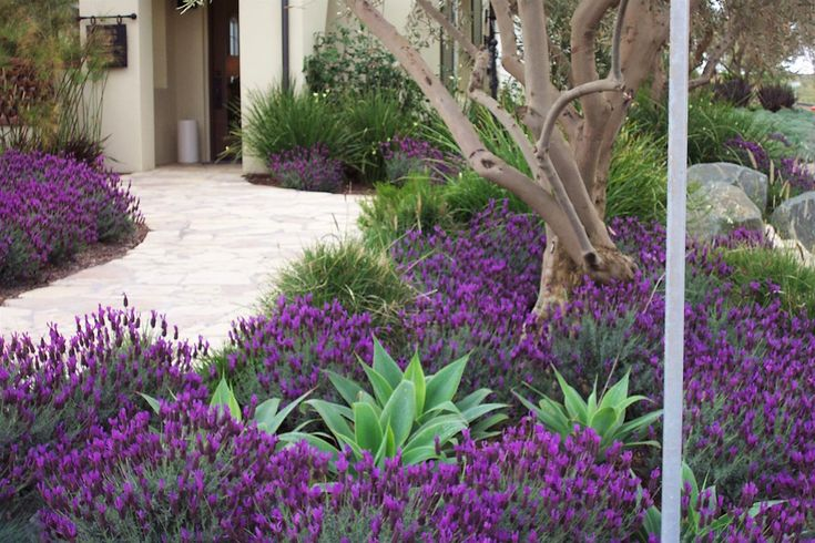 Torrey Pines Landscape Company | Drought-Tolerant Landscaping