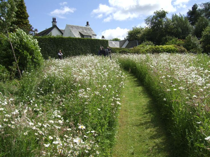 Best 25 Meadow garden ideas on Pinterest Wild flower