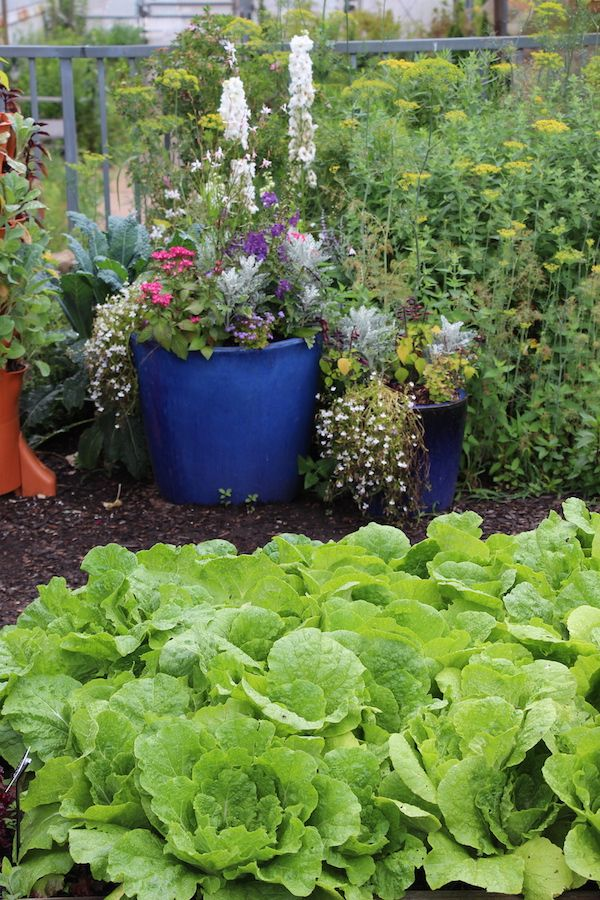 Fertilizer Numbers What They Mean And How To Use Them To Grow Better Plants Vegetable Garden Design Fertilizer For Plants
