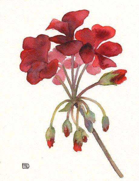 Red Geranium  Original Watercolour Painting by NaturePaintings, $38.00