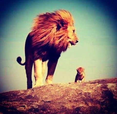 Life's Best #lion #king #shit #got #real