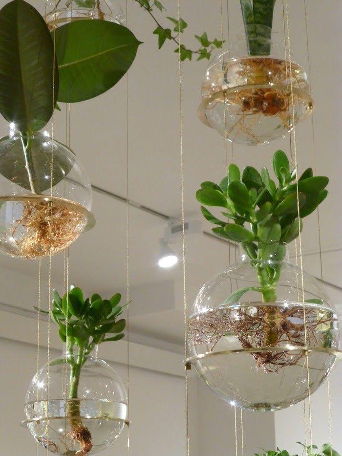 aquarium rond transparent suspendus et plante aquatique