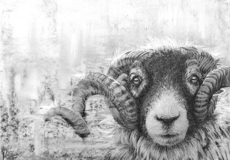 Nolon Stacey - Swaledale Tup #artist #gnas2017 #riponcathedral #northyorkshire