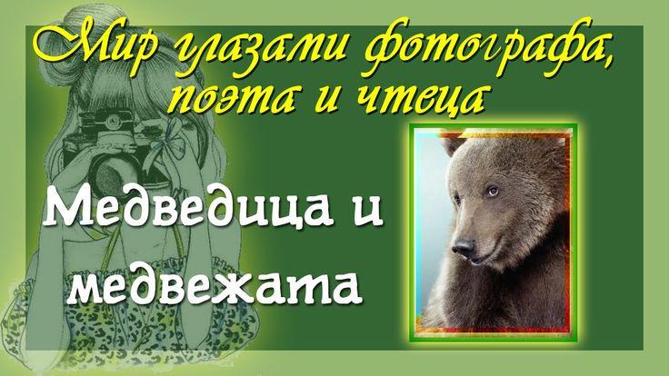 Медведица и медвежата Фото и  классный авторский стих и прочтение
