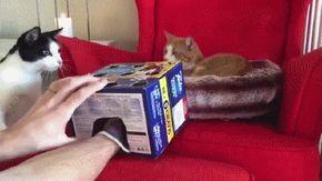 Entertaining Cat