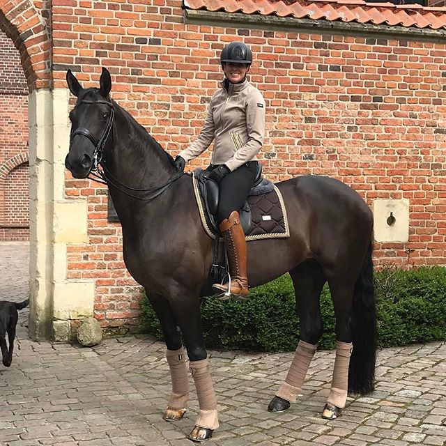 4e2ee8aa967 The dream outfit and horse #horse #horses #equestrianstockholm #equestrian  Equestrian Stockholm now in stock at Equestrian Performance!