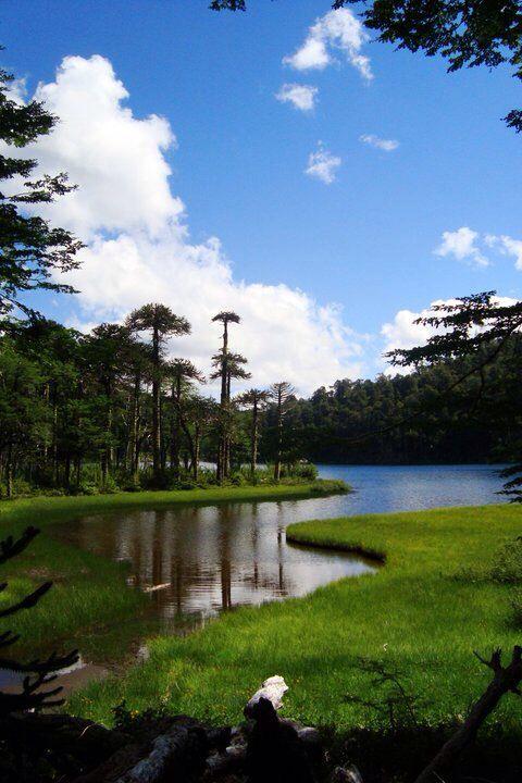 Parque Nacional Huerquehue. Temúco