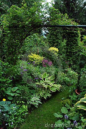 Shade plant ideas, height, variegation, lighter focal points in distance w height.