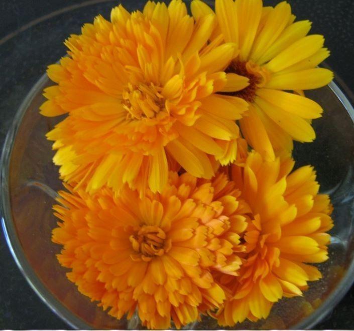 Maak zelf zalf van goudsbloemen (Calendula). Deze zalf is een goed eerste hulpmiddel bij (schaaf)wondjes, huidirritaties, verbranding door de zon en eczeem.  Ingrediënten