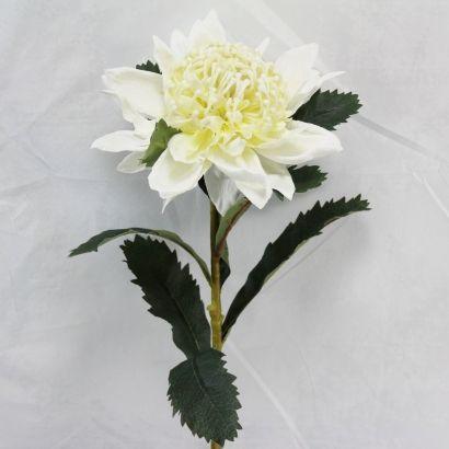 Large Waratah White
