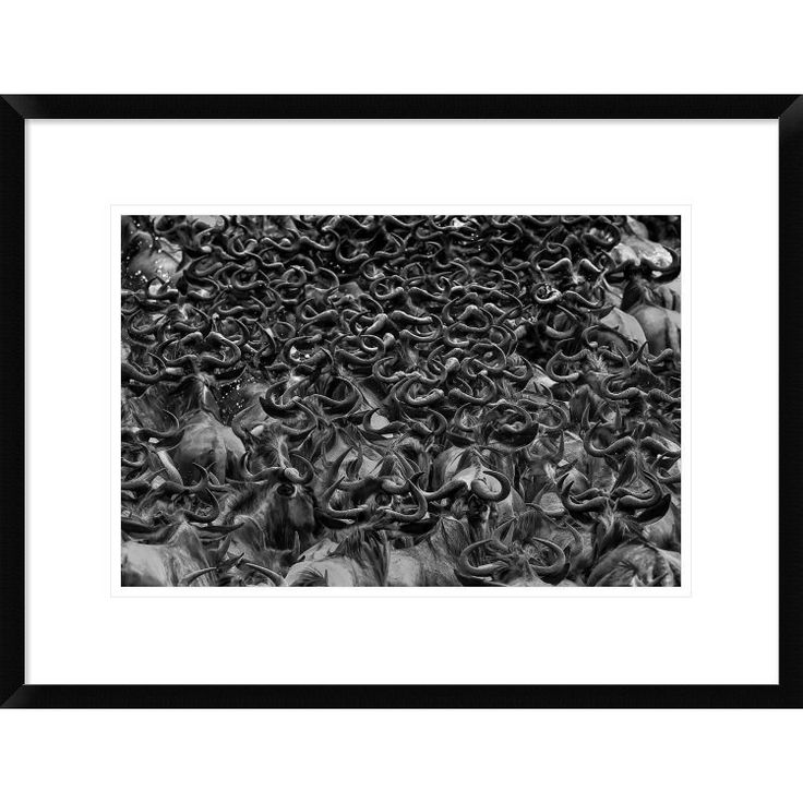 Global Gallery, Jun Zuo 'Wildebeest In Crossing' Framed Giclee Print