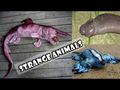 20 Strange Animals You Probably Didn't Know Exist