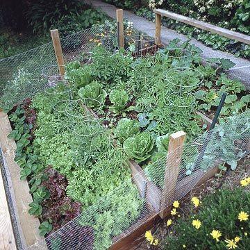 planting a veggie garden...