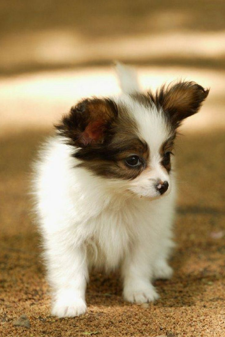 354 best Cute Puppies images on Pinterest