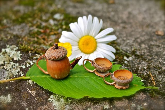 Cutest idea ever! Make a fairy tea set out of acorns. See how here...Twig and Toadstool: Fairies For Tea