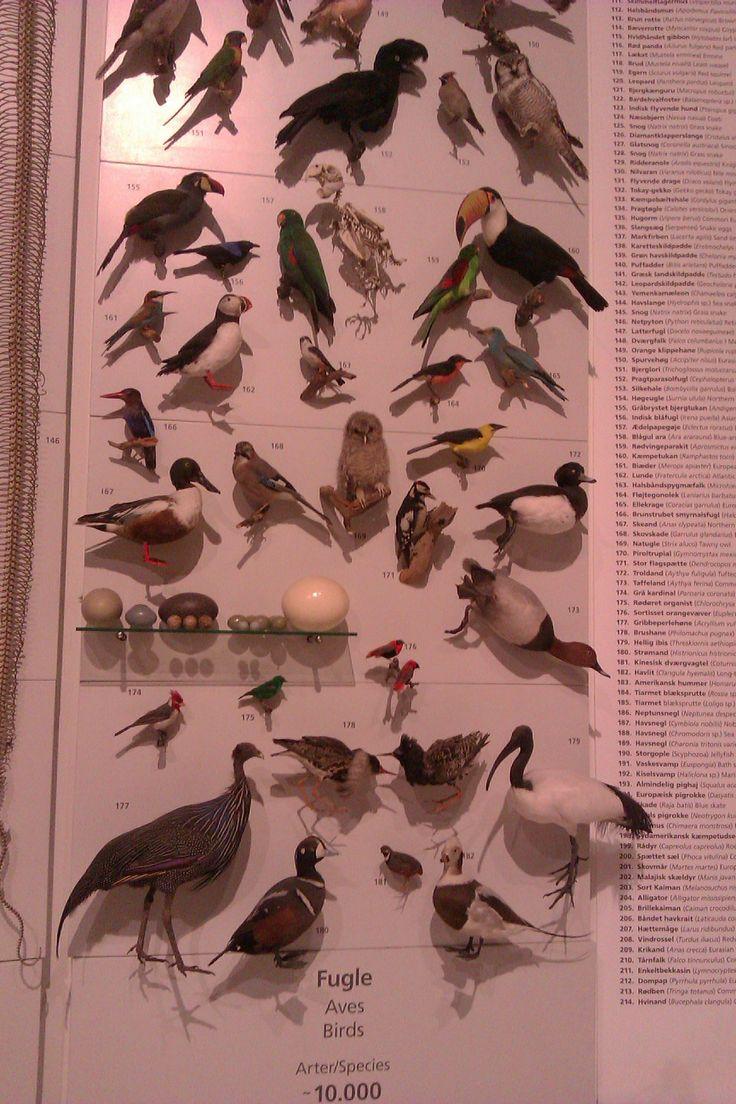 Zoologisk Museum. Lær de forskellige dyrearter at kende. Der er alt fra skeletter til udstoppede dyr.