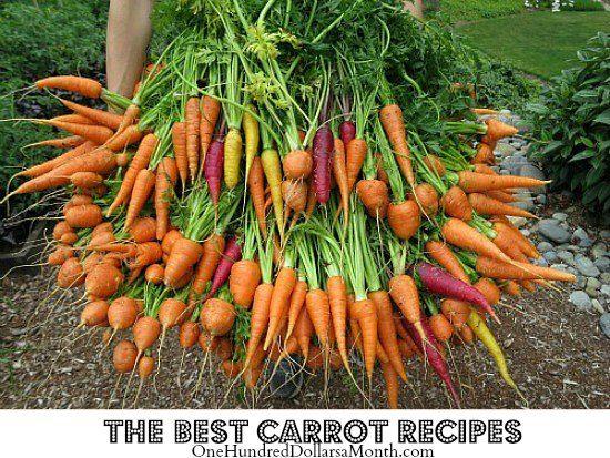 Recipes: The Best Carrot Recipes via OneHundredDoLLarsAMonth