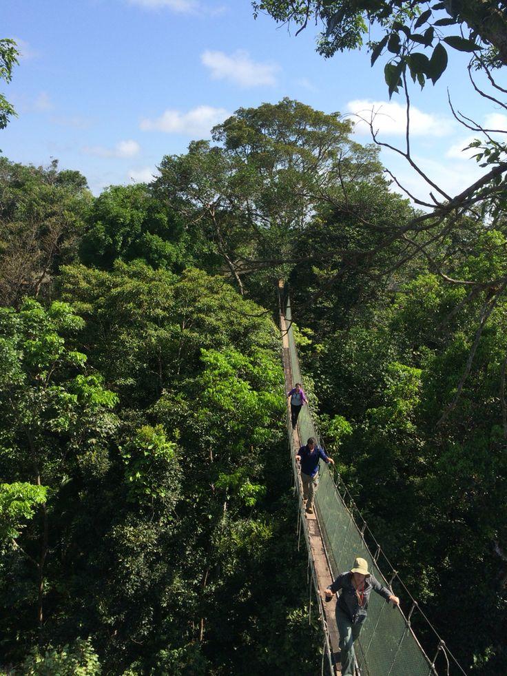 Canopy walkway in Amazon Rainforest Peru