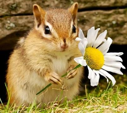 Cute chipmunk with flower
