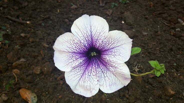 Petunia - I feel so blessed to work.outdoors