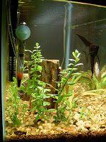 Zakładanie akwarium od początku