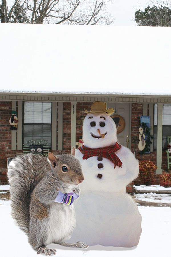 Fun Facts Did You Know That 1 Inch Of Rain In The Summer Equals About 10 Inches Of Snow In The Colder Months And W Squirrel Squirrel Memes Gutter Protection