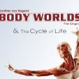 Body Worlds Exhibition Cape Town