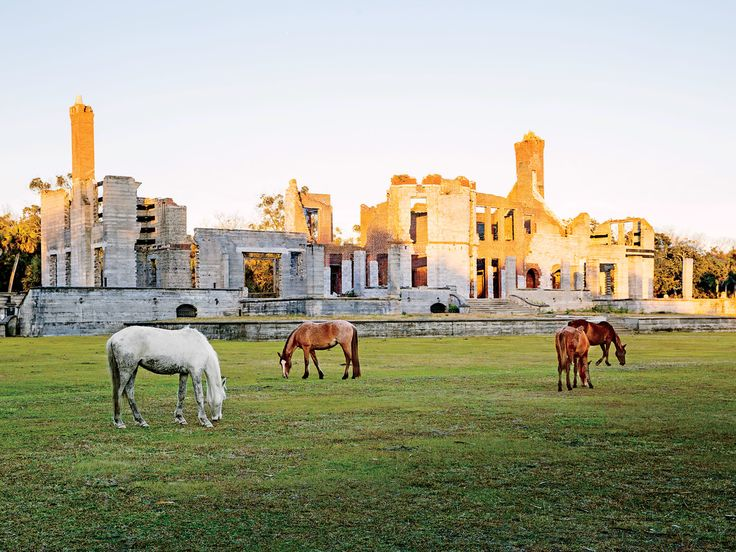 Cumberland Island in Time | Escape to nature at this inn on Georgia's Cumberland Island.