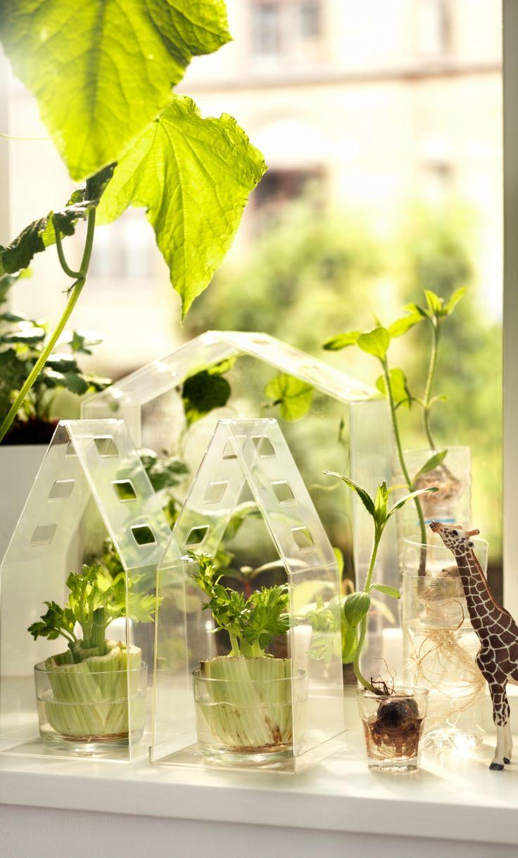 Meer dan 1000 ideeën over kruidentuin binnen op pinterest ...