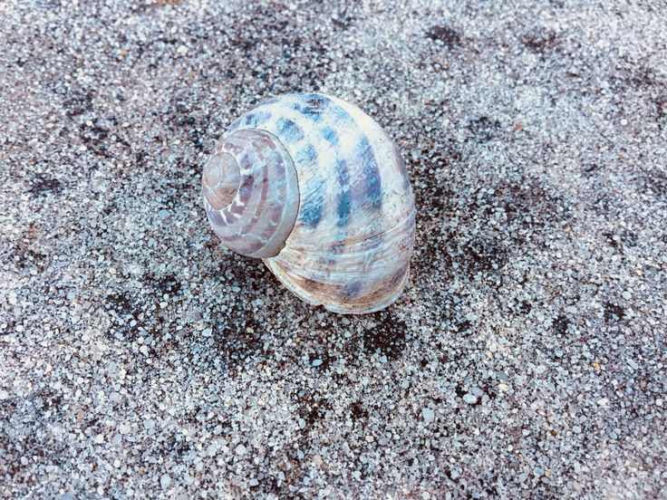 Snail shell because why not