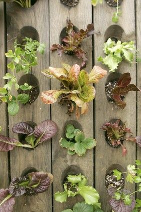 Vertical planter for lettuce, herbs, or strawberries