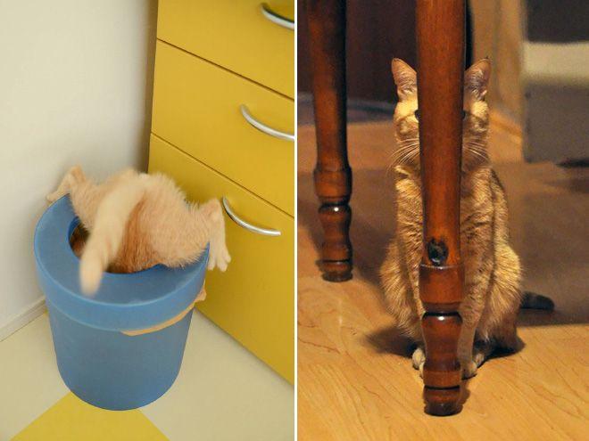 epic-galerie-xx-photos-qui-prouvent-que-les-chats-sont-des-ninjas-6