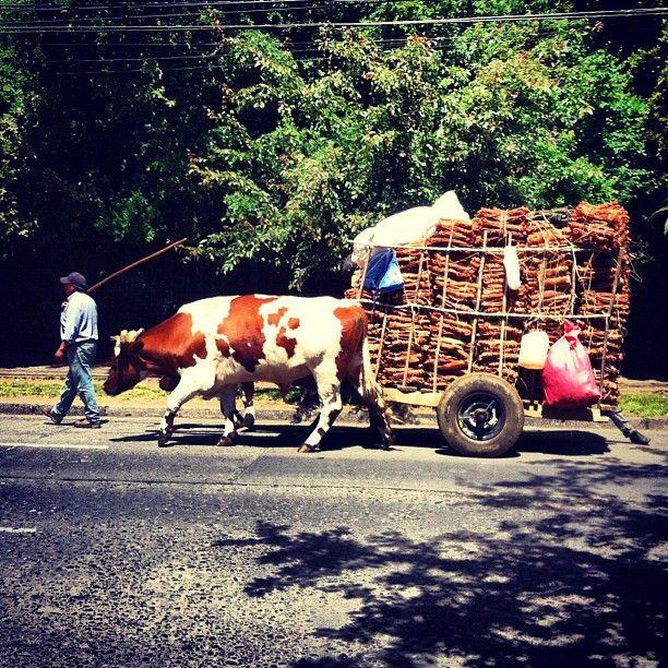 Temuco in Araucanía