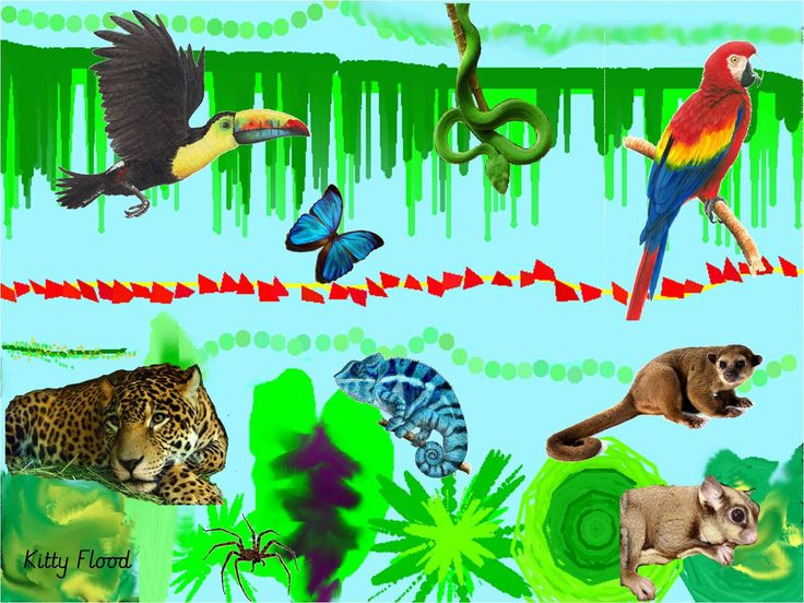 Kitty's Jungle