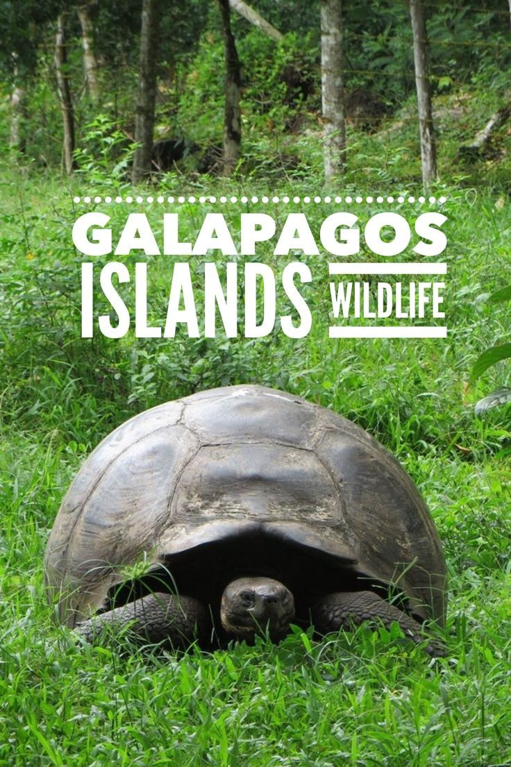 Visiting the Galapagos Islands and the animals that can be found nowhere else on earth is a bucket list trip for many. Photos of wildlife and landscape of the Galapagos Islands included in the post.