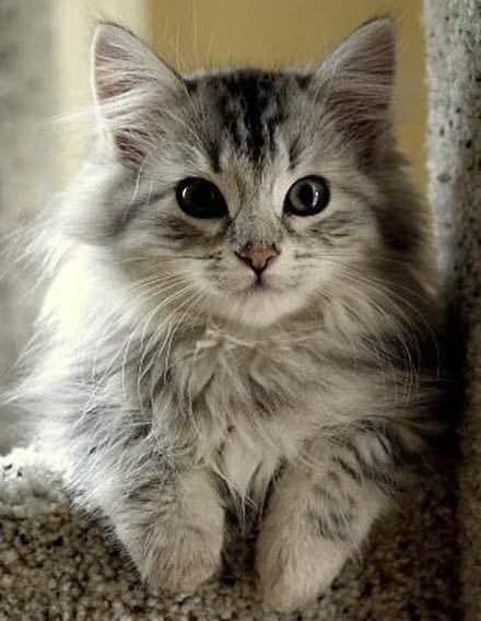 Tu sais que tu ressembles à mon chat toi ?