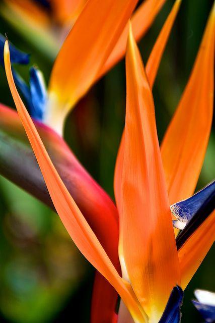 Tropical flowers like a Bird of Paradise can add a little aloha to anywhere.