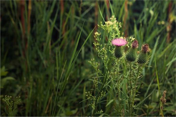 All In Nature by Diana Samoila, via Behance