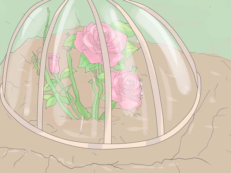 How to Plant Roses -- via wikiHow.com