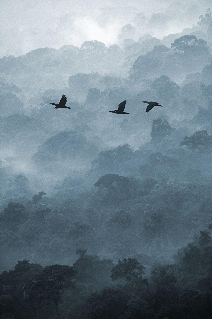 Fly by Anuchit Sundarakiti - sound of silence - photography - fotografia in bianco e nero