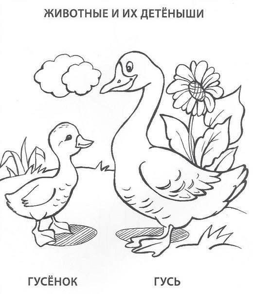 Домашние птицы и животные