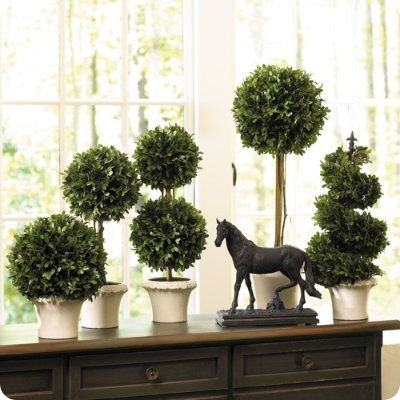 These boxwood topiaries are $49 and up at Anthropology but cheap to make! They look great in kitchens