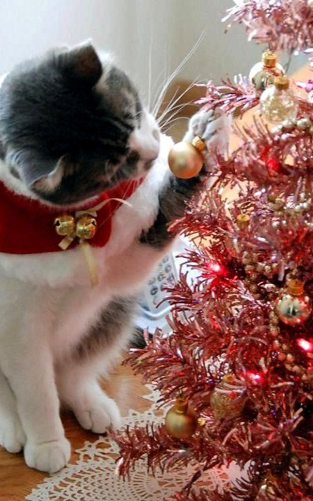 Cat playing with Christmas ornament...